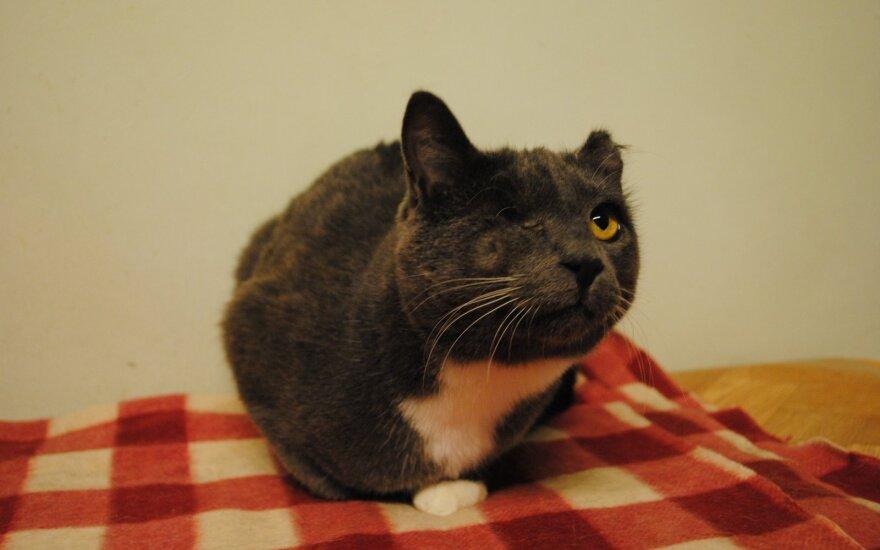 Katytė Pilkutė ieško namų