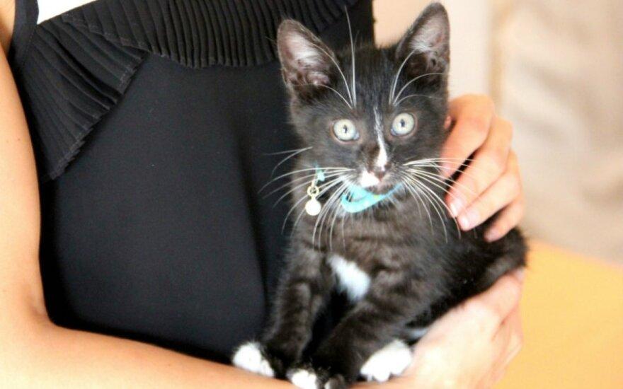 Dovanojamas išgelbėtas gražuolis katinukas Kemis