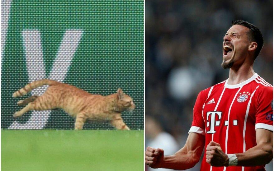 Rudas katinas ir Sandro Wagner