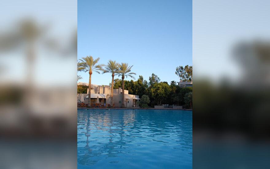 Palmės, vanduo, baseinas, vasara, atostogos, poilsis