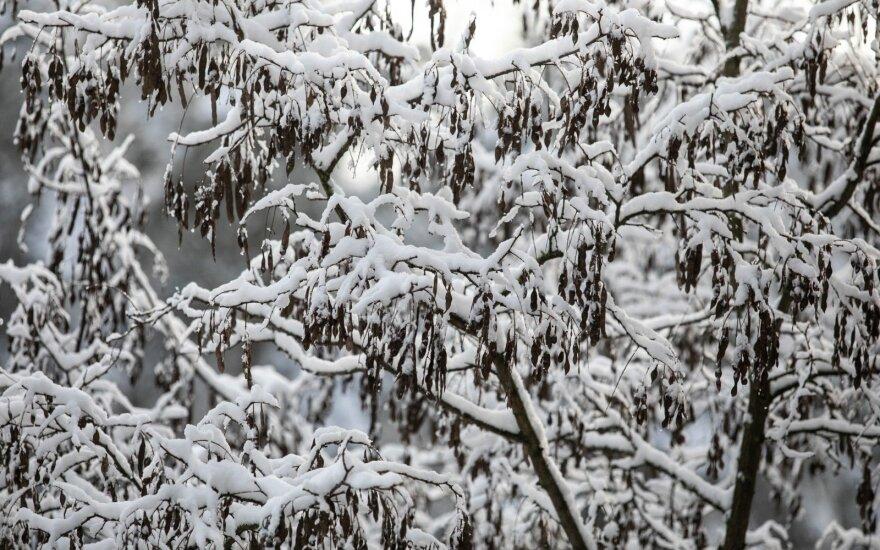 Žiemiški orai nors nenoriai, bet trauksis