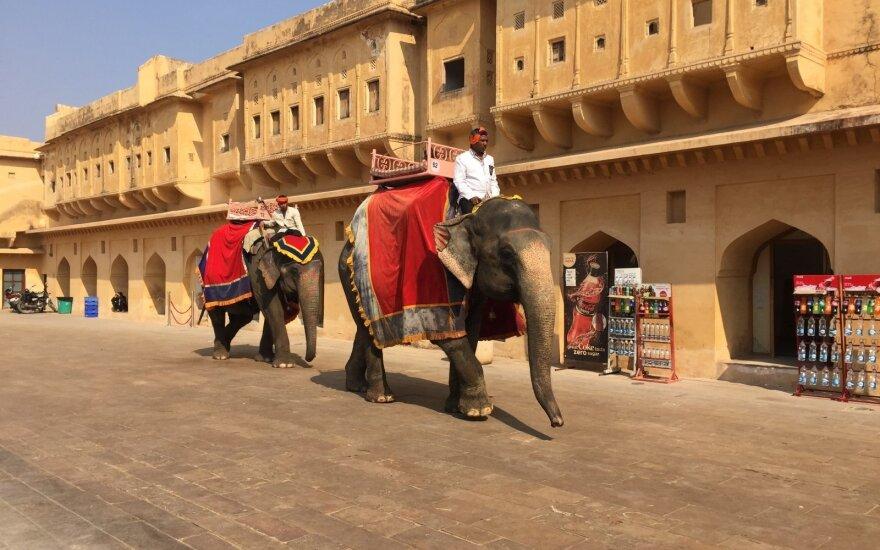 Dviejų savaičių istorija: kaip mes keliavome po Indiją