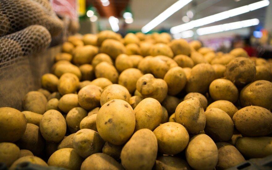 """Savaitgalį """"Iki"""" pirkėjams bus siūlomos pirmos lietuviškos bulvės"""