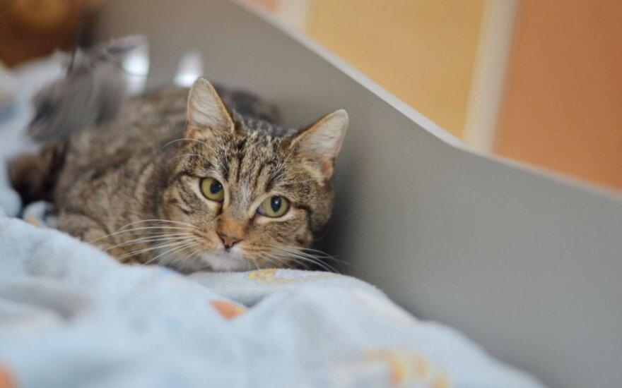 Jauna, rami, sterilizuota katytė, bet be savo namų...