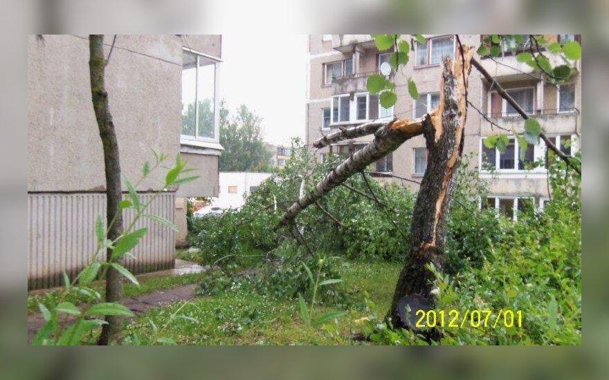 Gyventojai galės išverstus arba nulūžusius medžius pasiimti