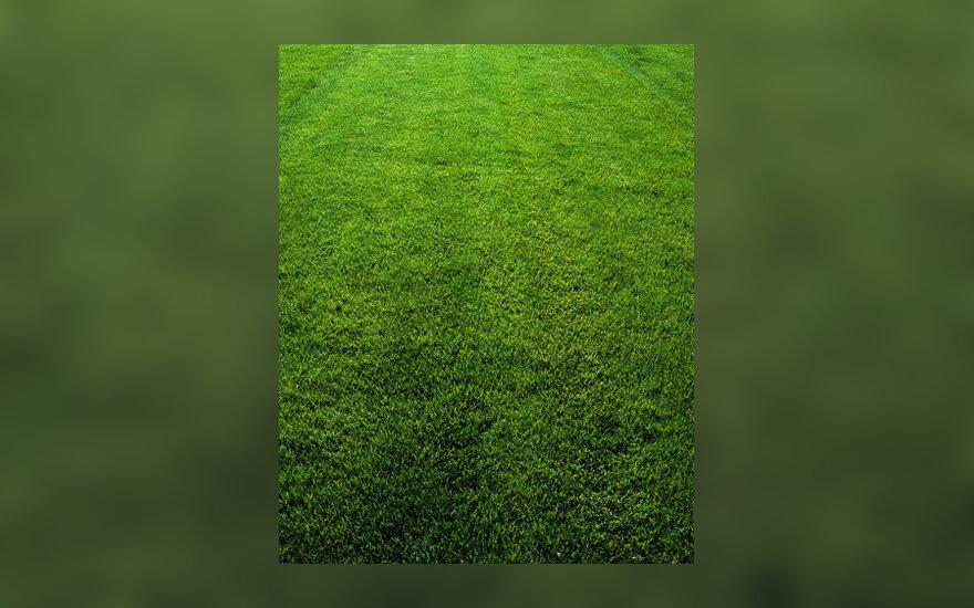 Žolė, veja, pievelė