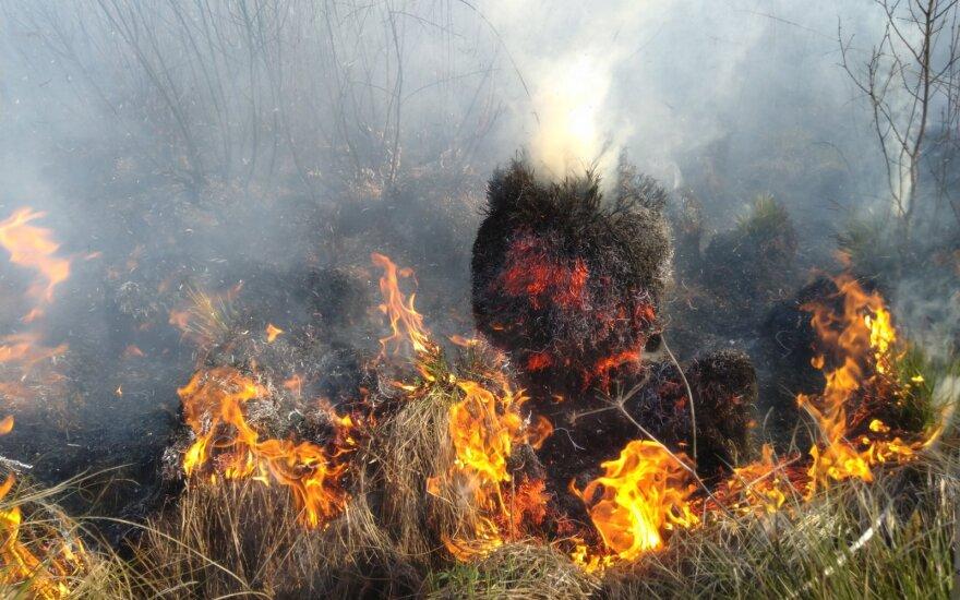 Miškininkai įspėja: šalyje itin didelė gaisrų rizika