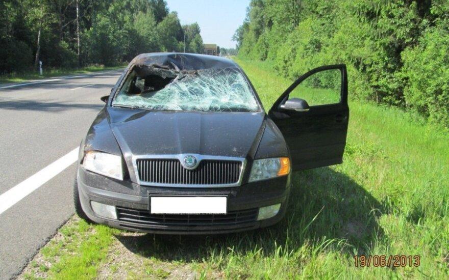 Po automobilio susidūrimo su briedžiu sužalota moteris