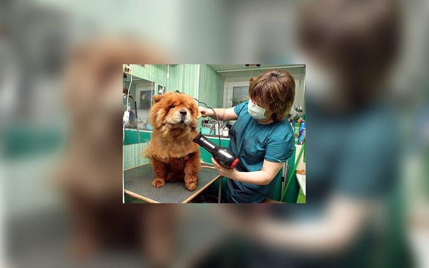Šunų grožio salonas Taline