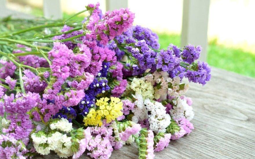 Prekyba skintomis gėlėmis lietuvei atvėrė kelią į Niujorką