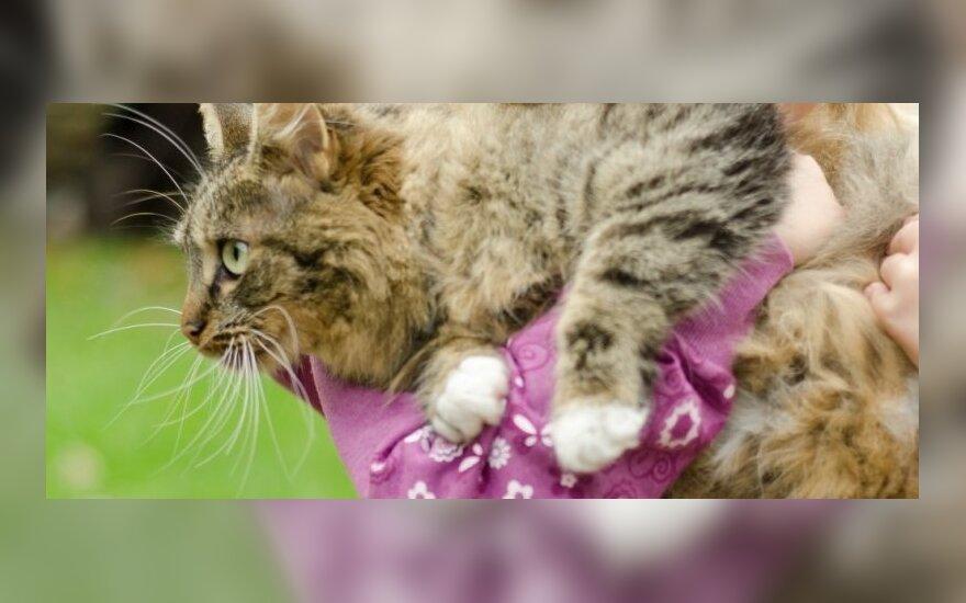 Graudi istorija: kaip beglobė katytė tapo šeimos nare