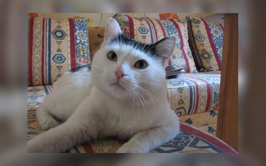 Namų ieško vienišas katinėlis Bardas