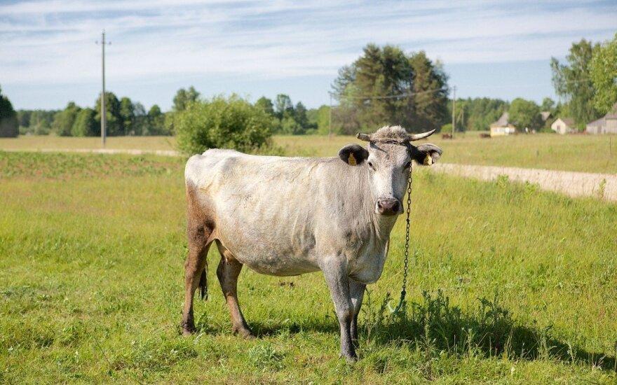 Lietuvos pienininkams neskyrė nė pusės prašytų pinigų