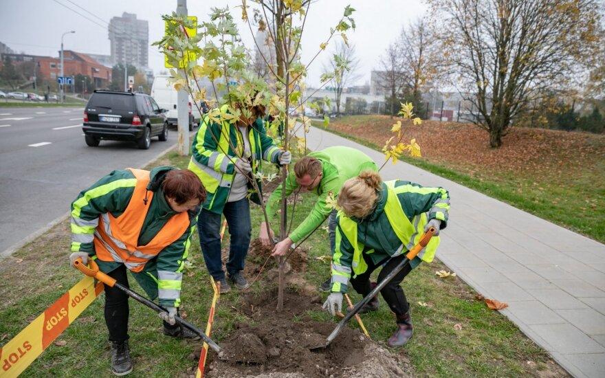 Vilniuje sodinama daugiau kaip 2 500 medžių ir krūmų