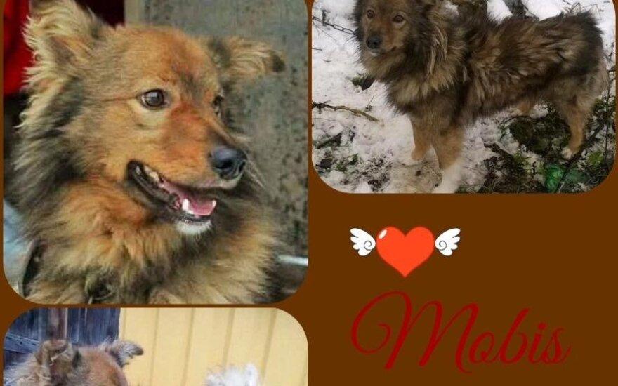 Visą Lietuvą sukrėtusi Mobio istorija: pensininkas teisinosi, kodėl uždaužė iš prieglaudos paimtą šunį