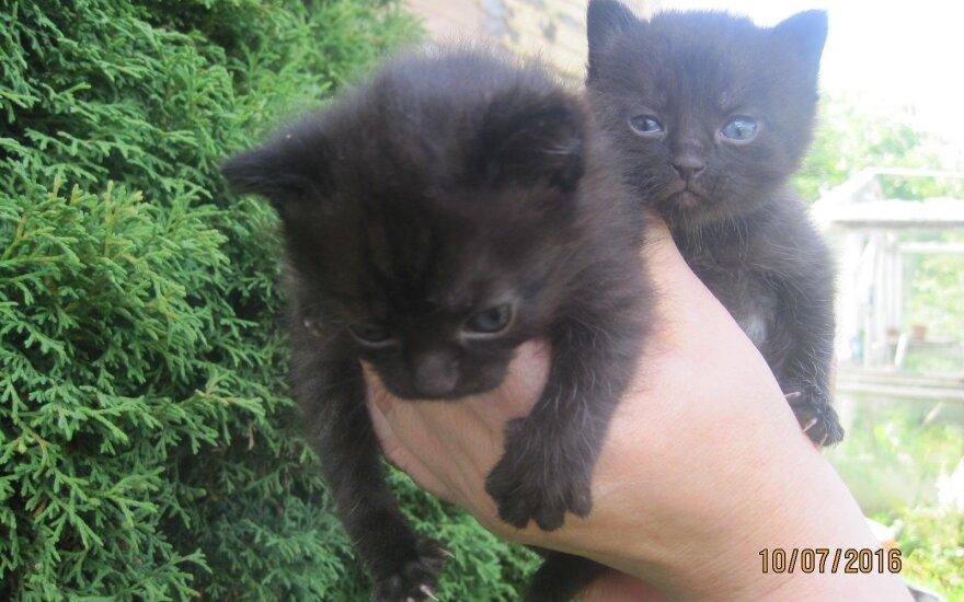 Dvi mielos mažylės ieško namų