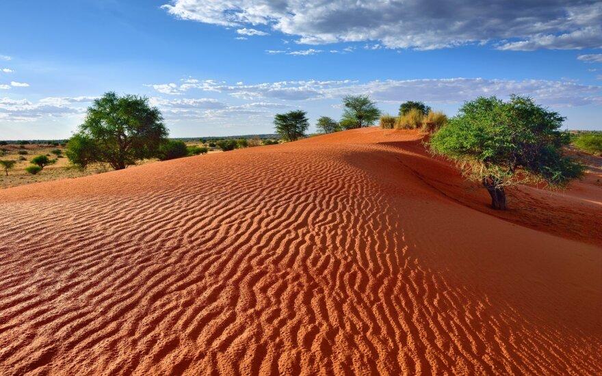 Mūsų planeta – neįtikėtina: nederlingose dykumose mokslininkai rado milijardus medžių