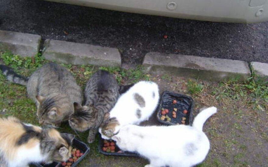 Draugiški katyčių pietūs