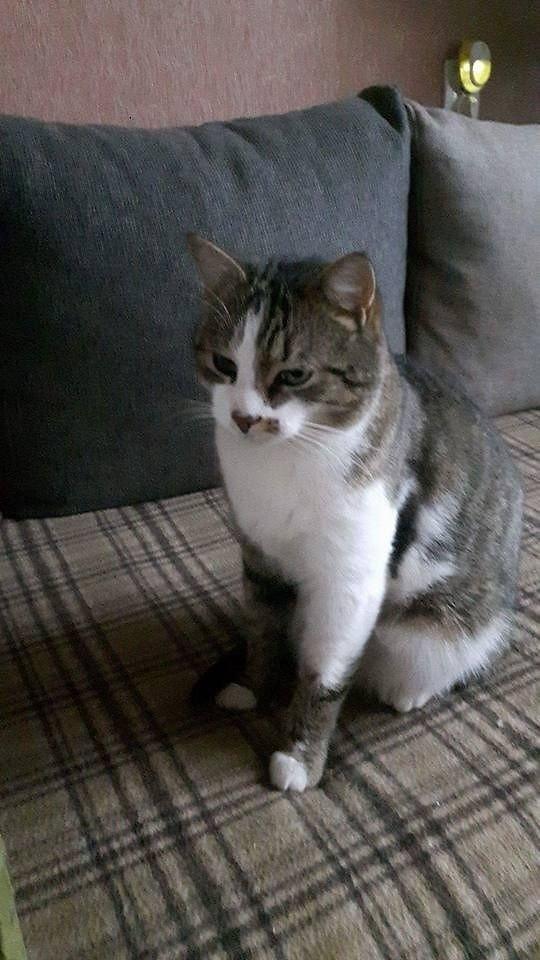 Alytuje rastas katinėlis: ieškome senų arba naujų šeimininkų