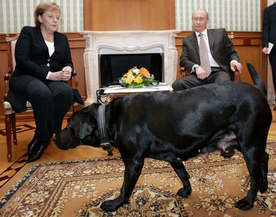Владимир Путин обсудил сАнгелой Меркель украинский вопрос