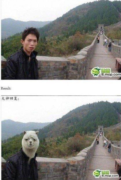 Photoshop'o troliai siaučia