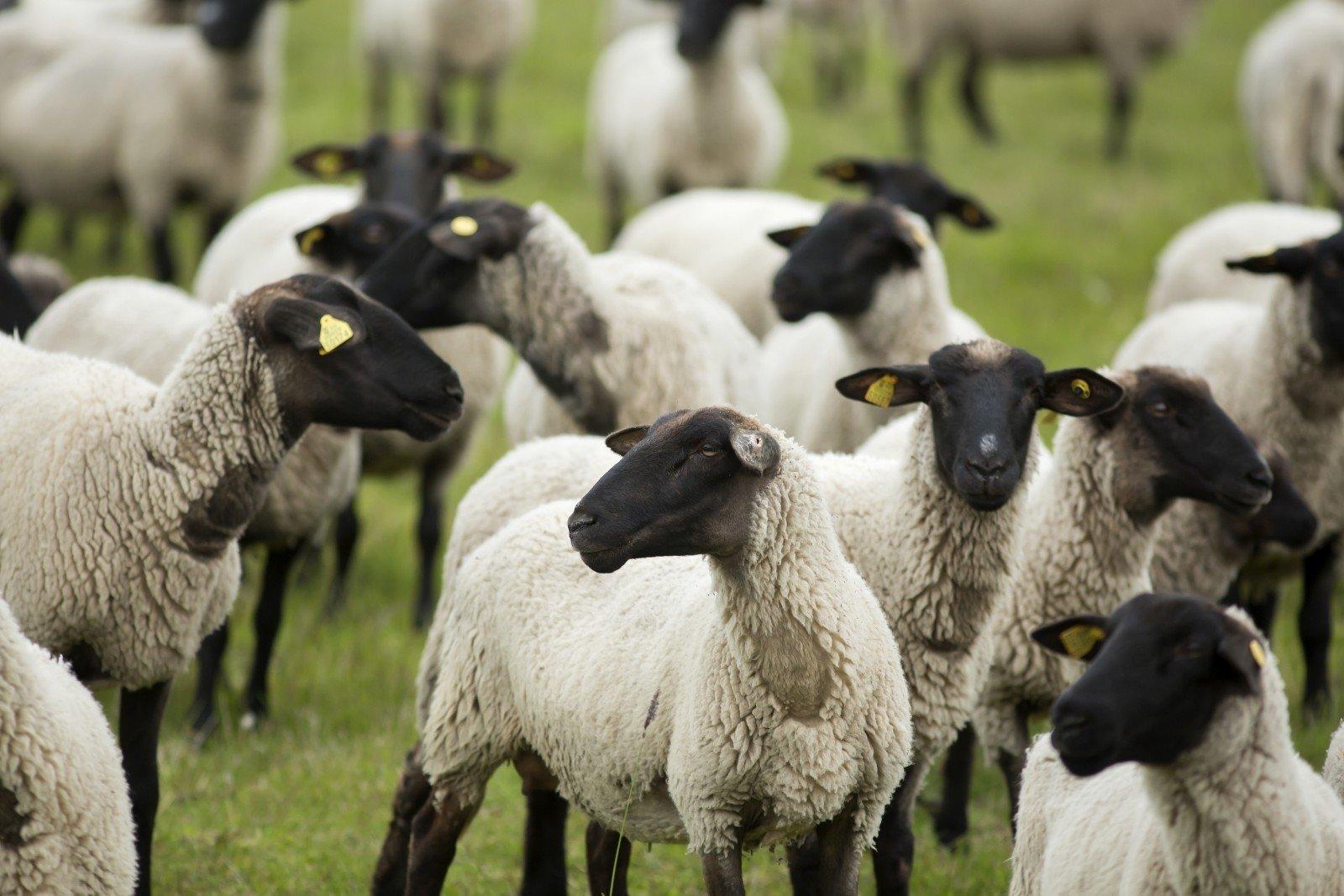 avino prekybininko galimybės)