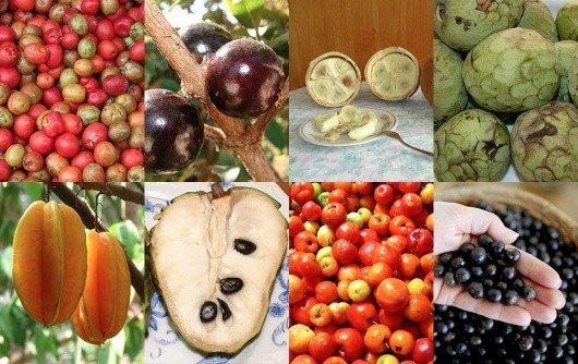 Brazilijos vaisiai
