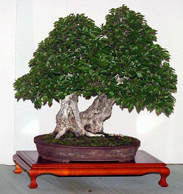 II bonsai paroda Alytuje_6