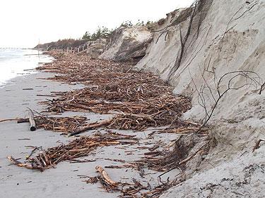 Palangos pajūris po audros (J.Skripkausko nuotrauka)