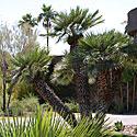 Palmės