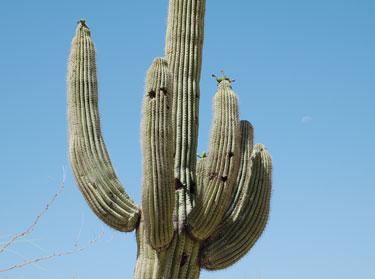 Kaktusas, vasara, karštis
