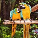 Egzotiška porelė