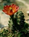 Kaktusai_22