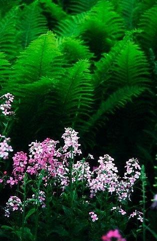 """Valgomos gėlės – nauja mada """"aukštojoje"""" virtuvėje"""