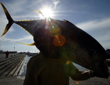 Filipinietis nešasi tuną