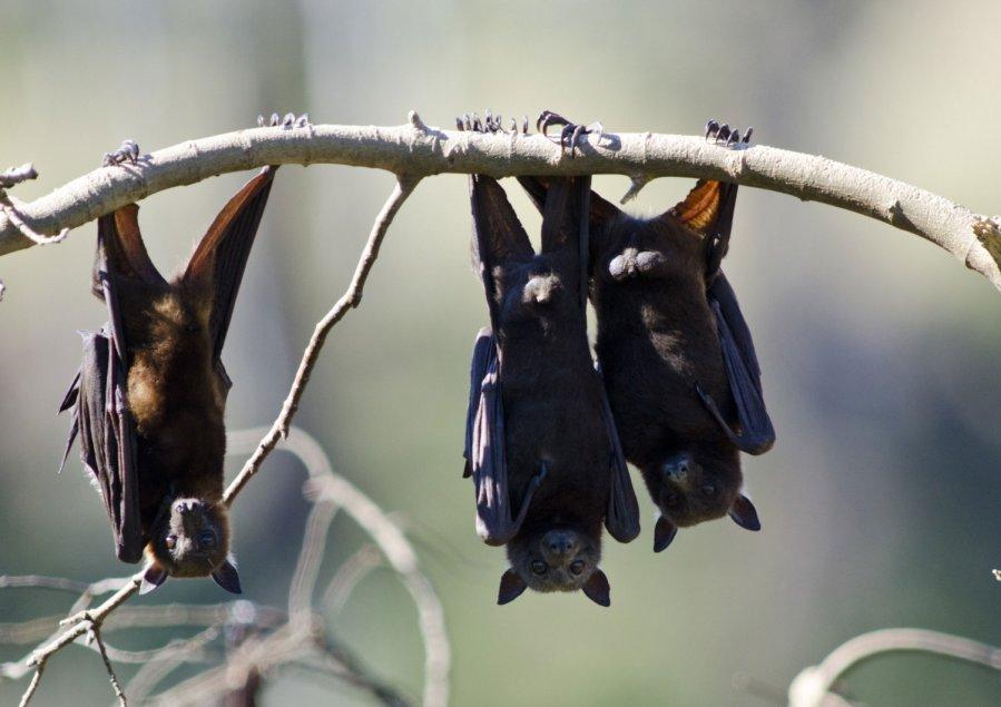 šikšnosparnių pasirinkimo sandorių valandos komentarai apie integral forex