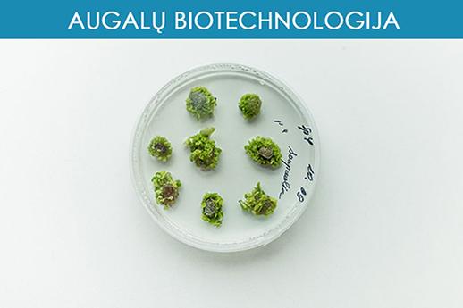 Augalų biotechnologija