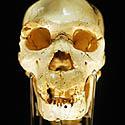 <i>Homo heidelbergensis</i> kaukolė