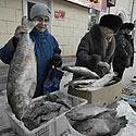 Žmonės perka žuvį Chabarovske, Rusijoje