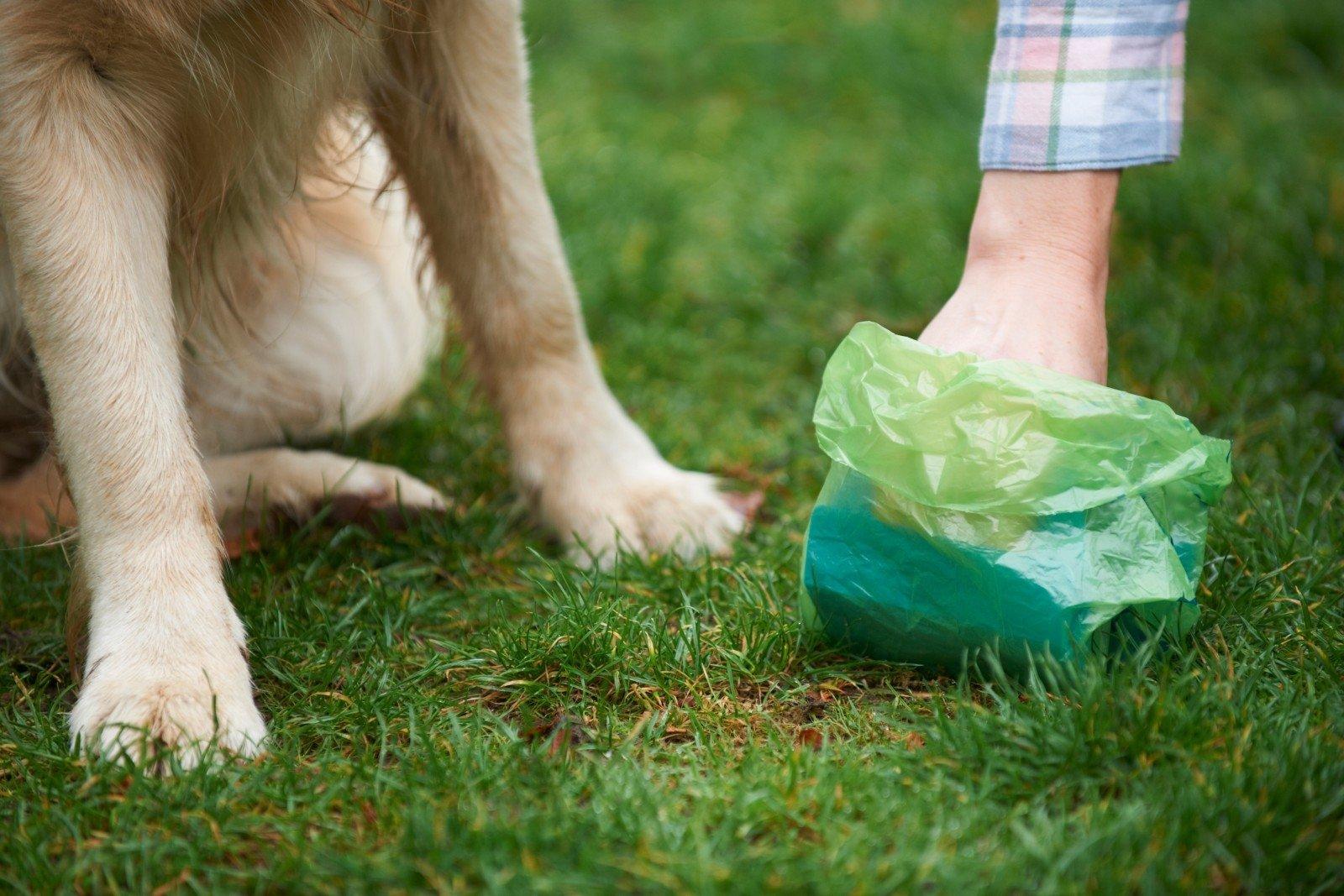 šuns širdies sveikatos dieta hipertenzija galiu valgyti kivi