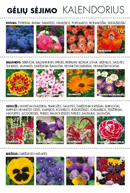 Gėlių sėjimo kalendorius