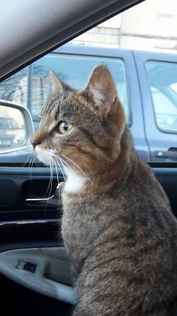 Katinas Katas, kuriam be namų negerai