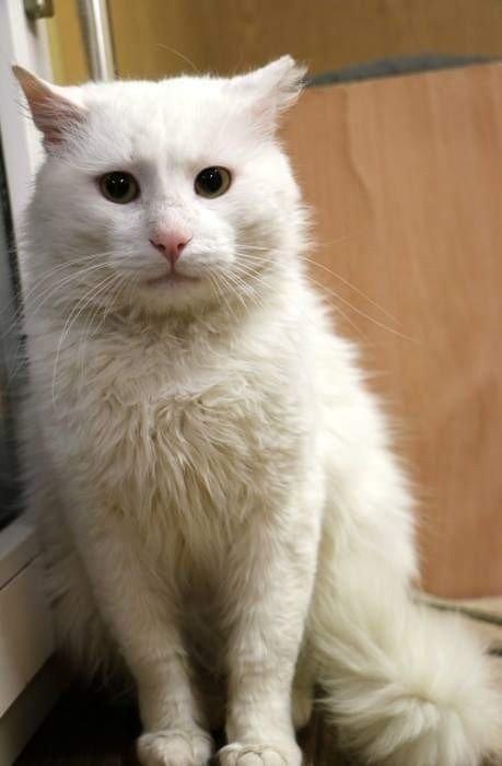 """Baltanosis katinėlis """"Beglobio"""" vagonėlyje laukia šeimininkų"""