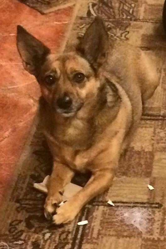 Klaipėdoje dingo mažas šuniukas