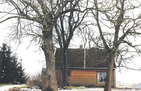 Rūtos ir Dainiaus Petkauskų namai