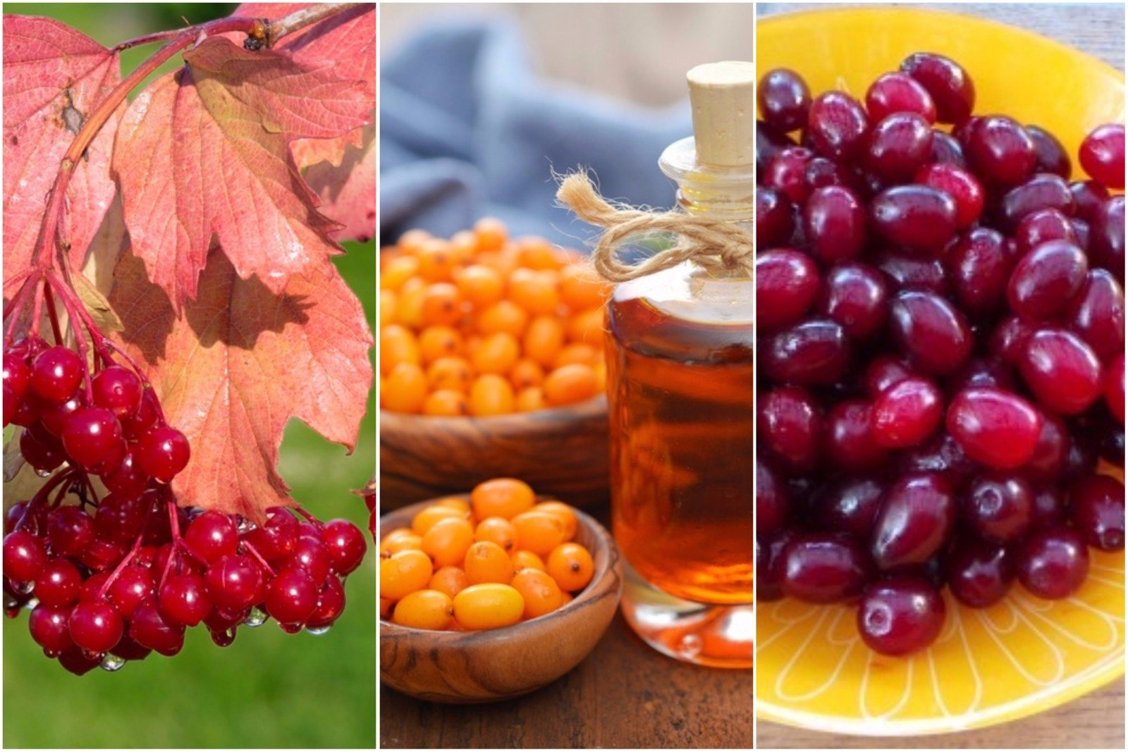 Kraujagyslėms naudingi maisto produktai | failitus.lt